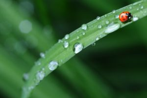 ladybug-574971_960_720